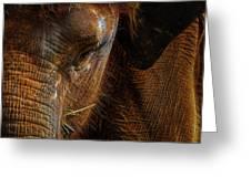 Asian Elephant Closeup Portrait Greeting Card