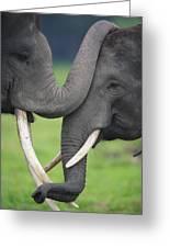 Asian Elephant Greeting Greeting Card