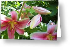 Asian Lilies Unfolding Greeting Card
