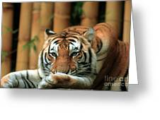 Asian Tiger 5 Greeting Card