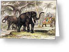 Asiatic Elephant With Young, 19th Greeting Card