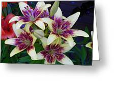 Asiatic Lillies Again Greeting Card