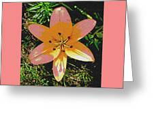Asiatic Lily With Sandstone Texture Greeting Card
