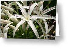 Asiatic Poison Lily Greeting Card
