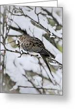 Asleep In The Snow - Mourning Dove Portrait Greeting Card