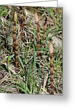 Asparagus In The Wild Greeting Card