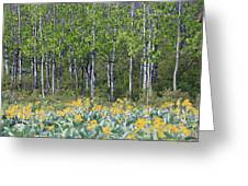 Aspen And Balsam Root Greeting Card