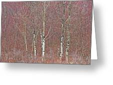 Aspen And Buckbrush Greeting Card