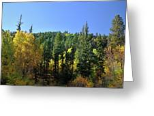 Aspen And Cottonwood In Concert Greeting Card by Ron Cline