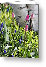 Aspen And Tulips Greeting Card