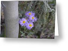 Aspen Asters  Greeting Card