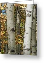 Aspen Bark Greeting Card