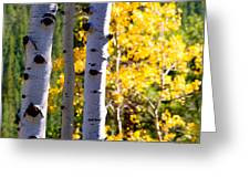 Aspen Color Greeting Card