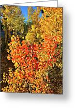 Aspen Colors In Dillon Colorado Greeting Card