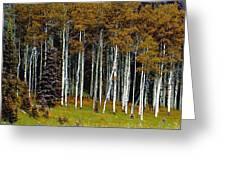 Aspen Fall Digital Greeting Card