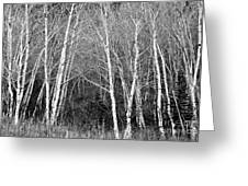 Aspen Forest Black And White Print Greeting Card