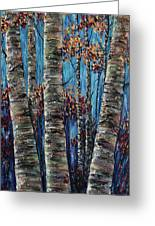 Aspen Forest In The Rocky Mountain Greeting Card