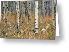 Aspen Forest, Mountain View County Greeting Card