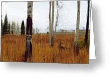 Aspen Forest Shear II Greeting Card