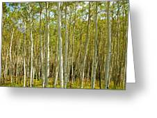 Aspen Forrest Greeting Card