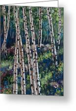 Aspen Glade Greeting Card