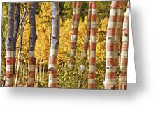 Aspen Gold Red White And Blue Greeting Card