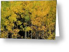 Aspen Haven  Greeting Card by Ron Cline