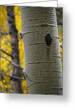 Aspen In Fall Greeting Card