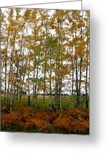 Aspen In Fall Greeting Card