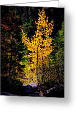 Aspen In Hope Valley Greeting Card