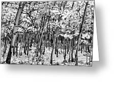 Aspen In Snow Black And White Greeting Card