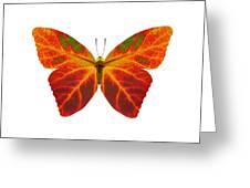 Aspen Leaf Butterfly 2 Greeting Card
