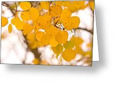 Aspen Leaves Greeting Card