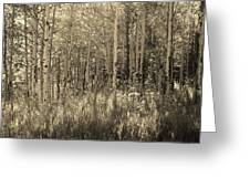 Aspen Light Greeting Card