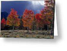 Aspen Light Greeting Card