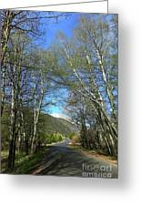 Aspen Lined Road Greeting Card
