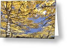 Aspen Sky Greeting Card