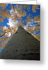 Aspen Sky Greeting Card
