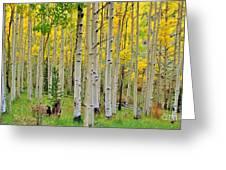 Aspen Slope Greeting Card