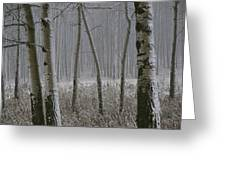 Aspen Stand In A Snowstorm Greeting Card