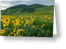 Aspen Sunflower And Mountain Landscape Greeting Card