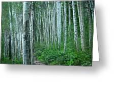 Aspen Trails  Greeting Card