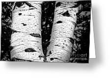 Aspen Tree Art Greeting Card