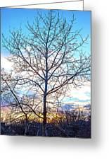 Aspen Tree At Sunset Greeting Card