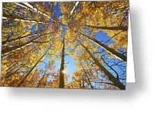 Aspen Tree Canopy 2 Greeting Card