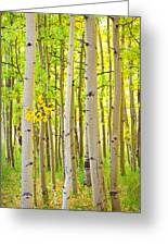 Aspen Tree Forest Autumn Time Portrait Greeting Card