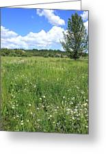 Aspen Tree In Meadow With Wild Flowers Greeting Card