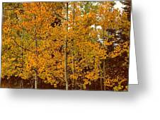 Aspen Trees With Autumn Leaves  Greeting Card