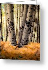 Aspen Trees With Ferns Greeting Card