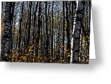 Aspen Trunks 2 Greeting Card